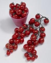 栄養価が高く甘さ・酸味・うま味のバランスもいいミニトマト「千果」