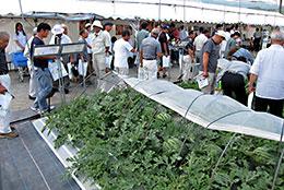 新品種やおすすめ品種を見学する生産者たち