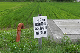 中山間地で地元の酒造メーカーが酒米づくりで水田を維持(新潟県糸魚川市で)