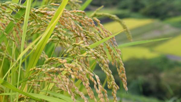 mukashinonoson1600_900.jpg