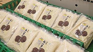 〔264〕冷凍 山の芋ペースト JA兵庫六甲(兵庫県)