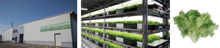 植物工場のイメージと生産するレタス