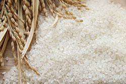 【 2019年産米の作柄・2】 JAコメ担当者の声「主食用の確保も課題」「大規模集約に限界感」