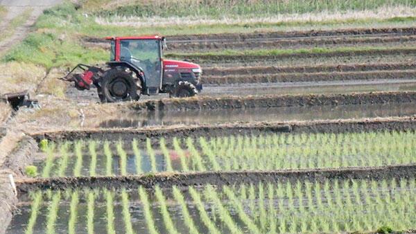 主食用 需給緩和の恐れ-2年産米作付意向
