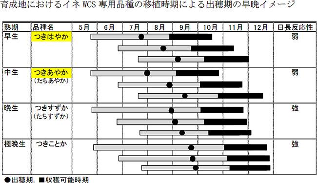 育成地におけるイネ WCS 専用品種の移植時期による出穂期の早晩イメージ