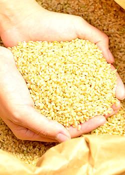 自然栽培米「にこまる」