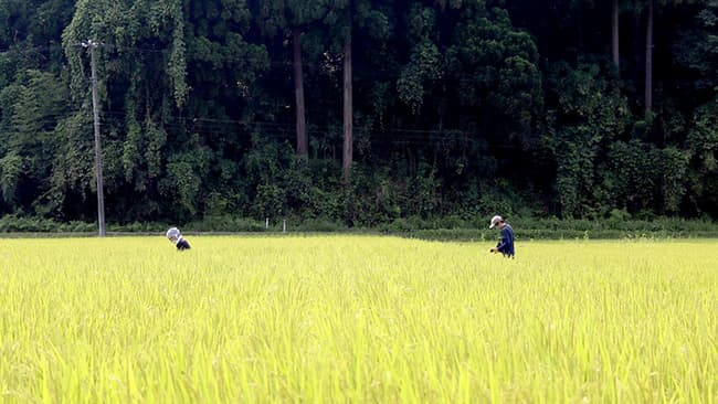 ほ場の土壌環境調査の様子