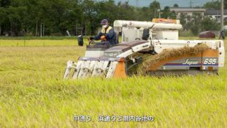 酒米「福乃香」の収穫