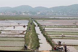 北ベトナムは田植え真っ盛り