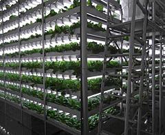 植物工場内部の様子(イメージ)