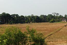 バンテアイスレイ村周辺の乾ききった水田