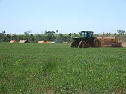 不法占拠に移住者は大豆の播種で対抗