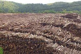 三重エネウッドが利用する間伐材