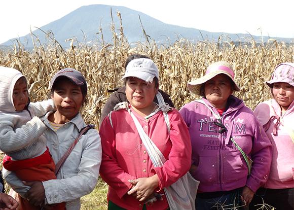トウモロコシ収穫作業で雇われ、日当110ペソ(約1000円)で働く農民たち(メキシコ州で)
