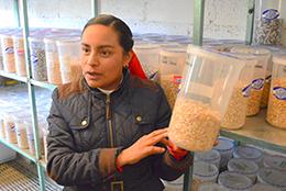 伝統の種子を守るため原種を保存する(メキシコ州アトラコムルコのトウモロコシ生産者組合で)