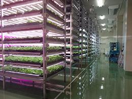 完全密閉型植物工場の内部