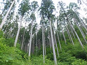 飛騨高山盛組管理の森林