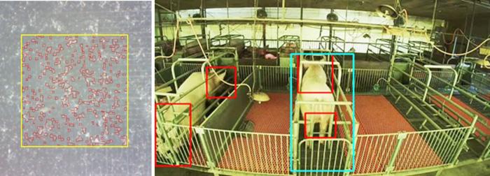 左が農場で手軽に使用できる精液品質評価システム、右が常設カメラの行動分析による発情・分娩検知システム(いずれも特許出願中)