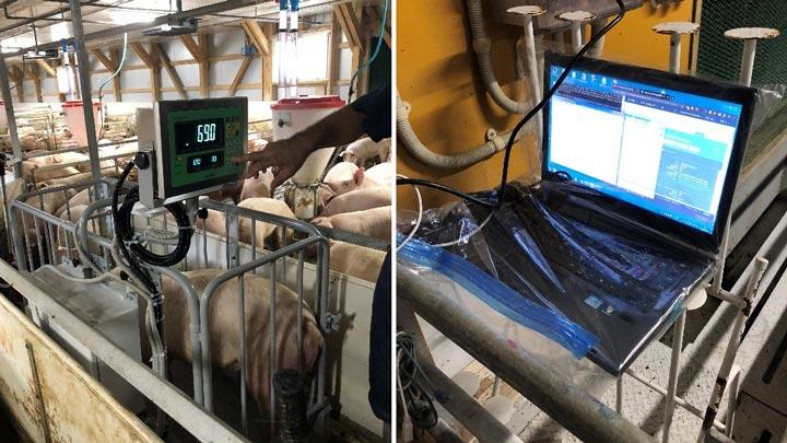 「スマート農業実証プロジェクト」トヨタの参画で加速化 Eco-Pork