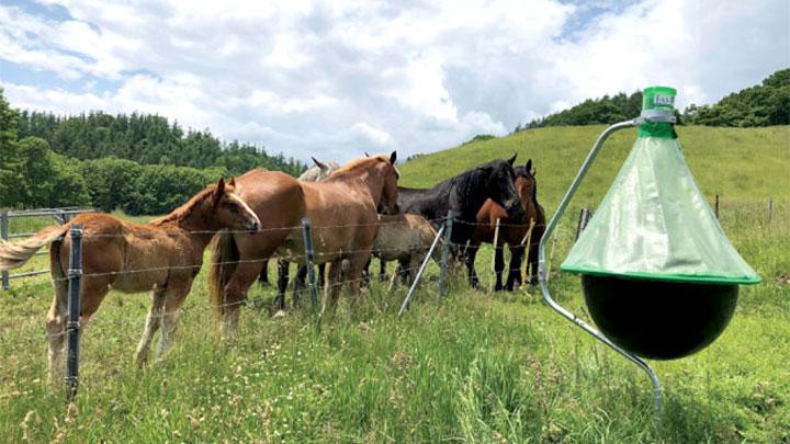 「アブキャップ」を設置した放牧場
