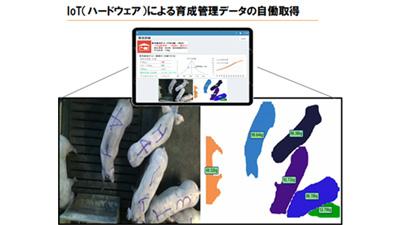 AI自働豚体重測定カメラ国内初の実用化 ジャパンファームで本格運用開始 Eco-Pork
