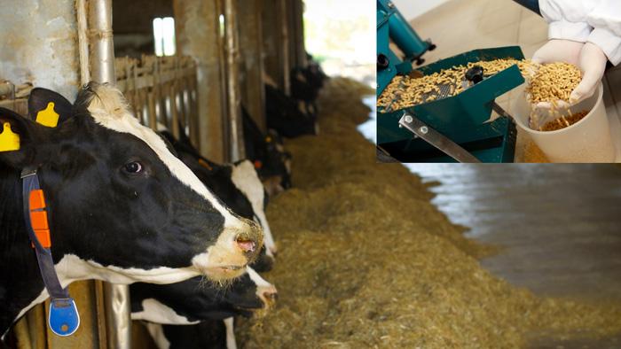 動物飼料用酵素の市場規模 2026年までに18.8億米ドルに達する見込み