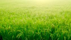 米情勢と米穀事業 JA全農高尾雅之常務理事に聞く