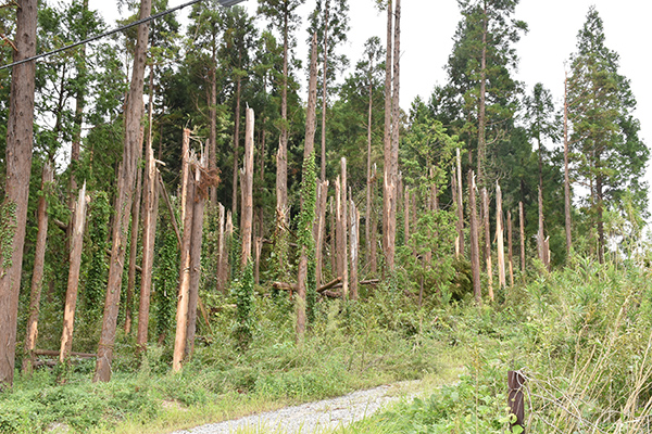 【クローズアップ・台風被害】いつでもどこでも自然災害 現地ルポ 千葉・愛媛・宮崎