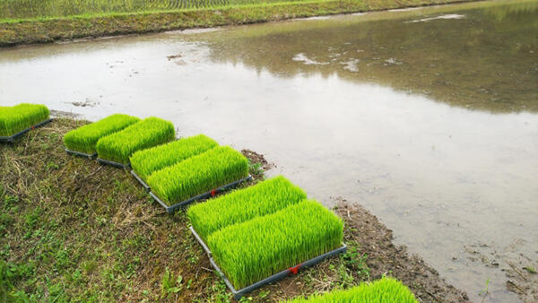 「種苗法」の議論を 「新世紀JA研」「種子を守る会」が呼びかけ