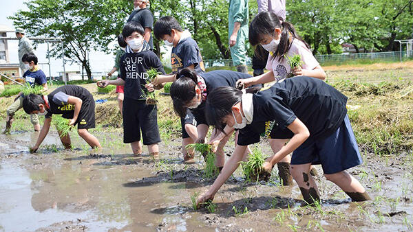 鶴岡市立京田小5年生が田植え体験-JA鶴岡などが協力