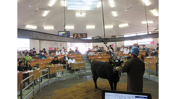 防疫体制を継続する中、前回を上回る来場者で活況を呈した牛市(長崎県壱岐市)