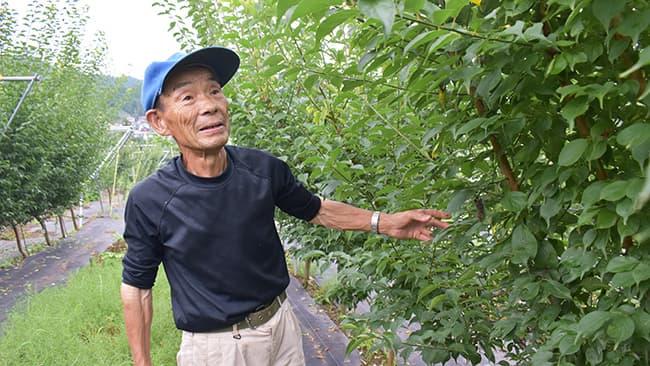 新たに植栽した梅の木の世話をする石川さん