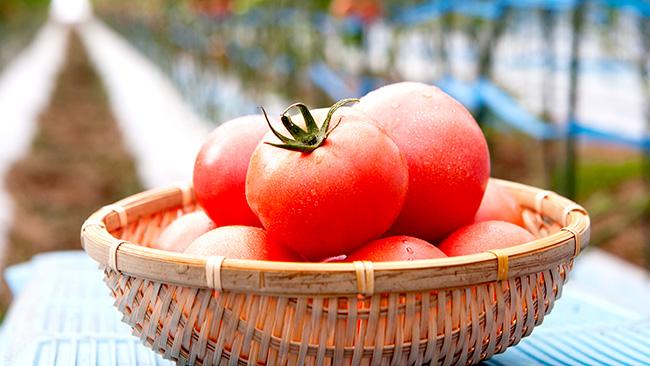 熊本県産トマト