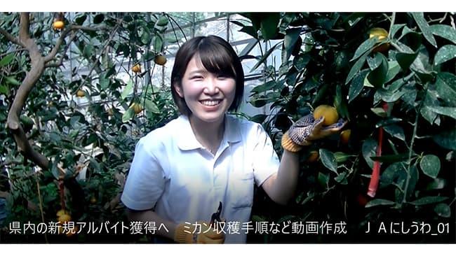県内の新規アルバイト獲得へ ミカン収穫手順など動画作成 JAにしうわ