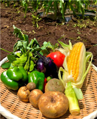 体験農園で収穫した野菜