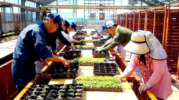障がい者の就労を支援する農福連携の農作業