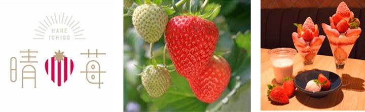 岡山県産いちご「晴苺」フェア実施中 みのるダイニングさんすて岡山店・JA全農