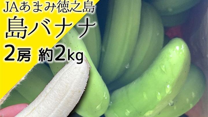 鹿児島県徳之島産「島バナナ」数量限定で販売開始 JAタウン