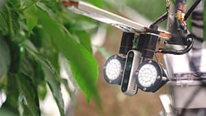 AIと収穫ロボットで人手不足を解決1