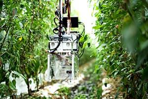 AIと収穫ロボットで人手不足を解決2