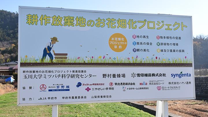 農産官学で耕作放棄地をお花畑に