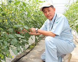 トマトの生育状況などを確認している藤井室長