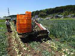 新たな業務向け産地確立めざし マーケットイン起点の事業を展開 / JA全農とちぎ(上)