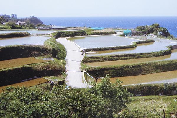 多面的機能を果たす棚田(兵庫県丹後半島)
