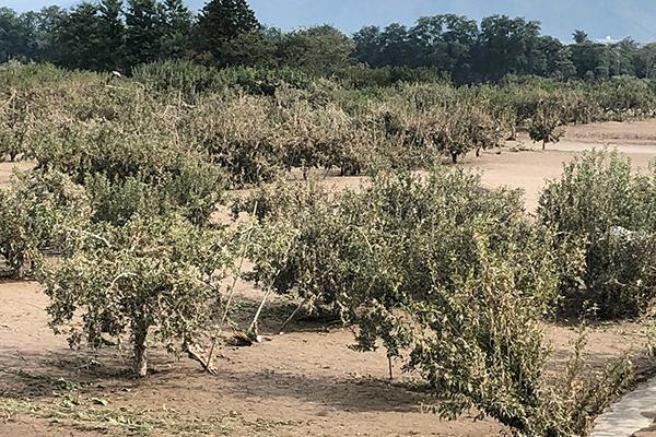 【JA長野中央会・雨宮勇代表理事会長に聞く】営農継続の意欲支援を 泥の堆積50センチ