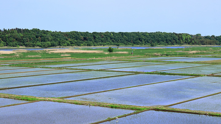 主食用 前年並み意向「28県」 一層の作付け転換を-野上農相