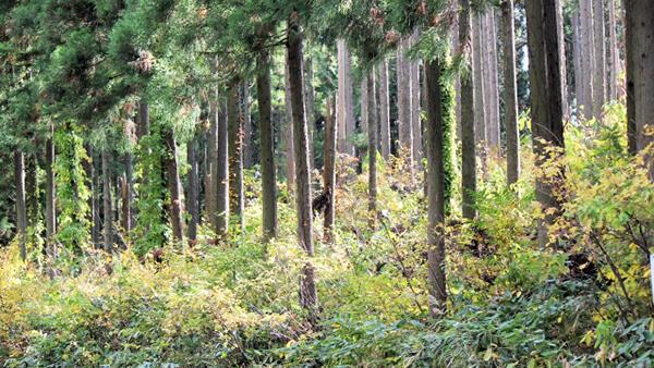 外国法人等の森林取得