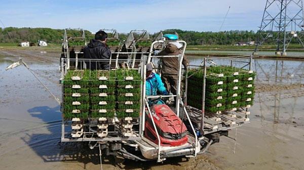 北海道で農業人材紹介事業を開始ーインパクトホールディングス