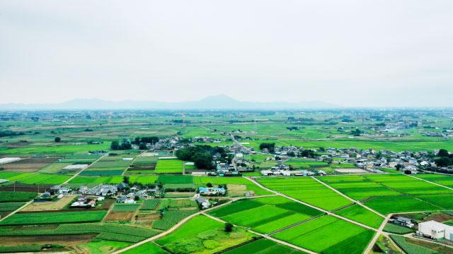 水田フル活用し非主食用米へ転換を-JAグループ水田農業対策