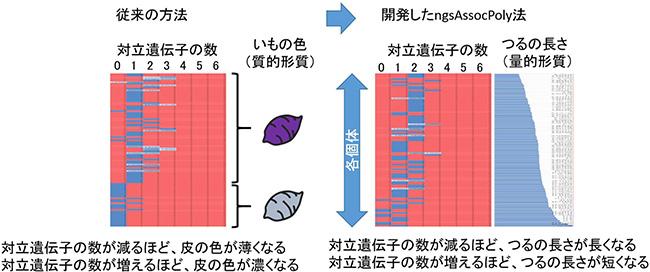 対立遺伝子と形質との関係